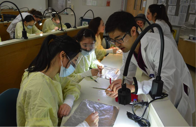Richard Hong '20 assisting a pre-dental student with their wax-up.